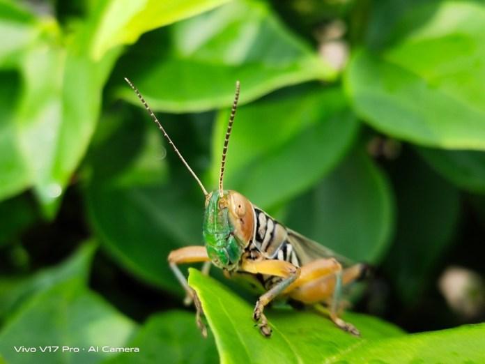 ảnh chụp macro côn trùng bằng điện thoại